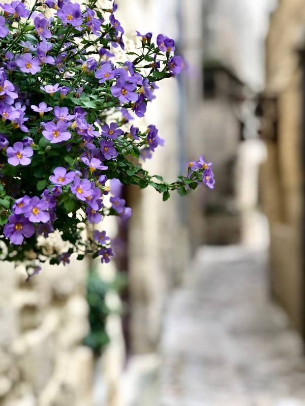 Flower Basket. Uzes. Provence Alpes Cote d'Azure. All Things French TOURS