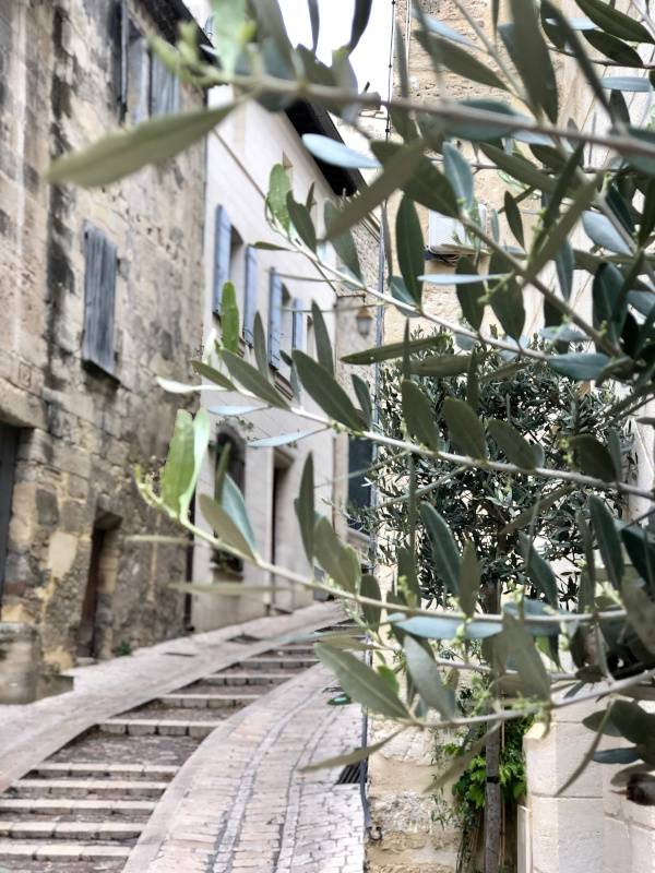 Olives and Street. Uzes. Provence Alpes Cote d'Azur. All Things French TOURS.